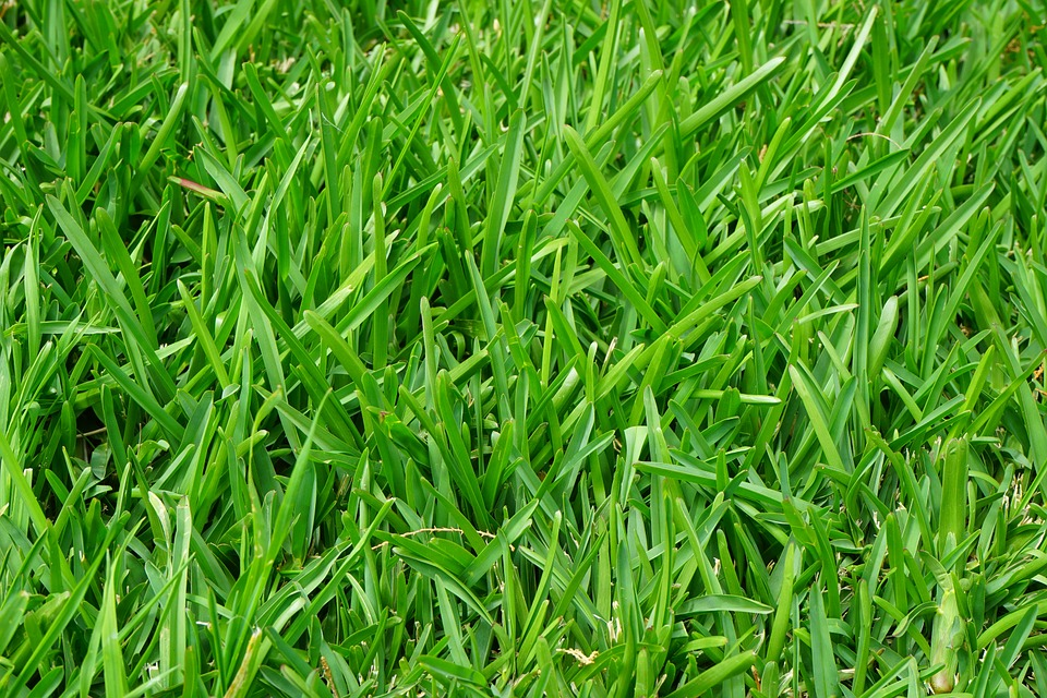 grass turf