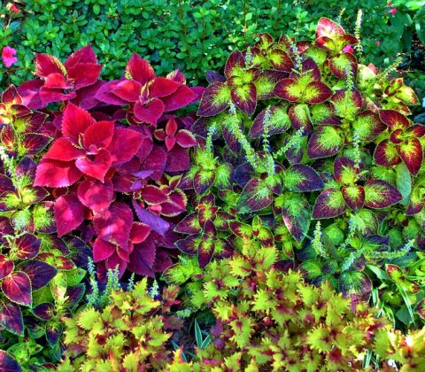 green roof plant varieties